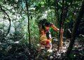 Cậu bé 22 tháng tuổi cùng bố trekking rừng Cát Bà