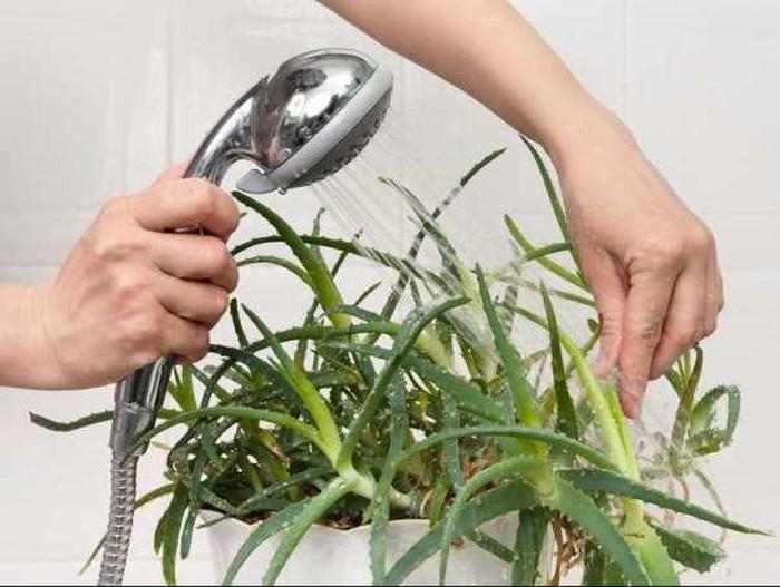 Đã mắt với những loại cây siêu xinh, rinh về ngay phòng tắm